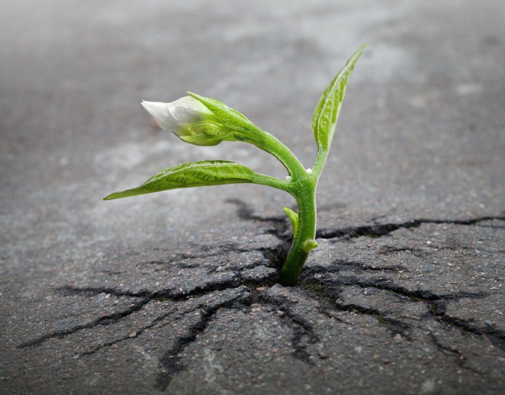flower growing through pavement